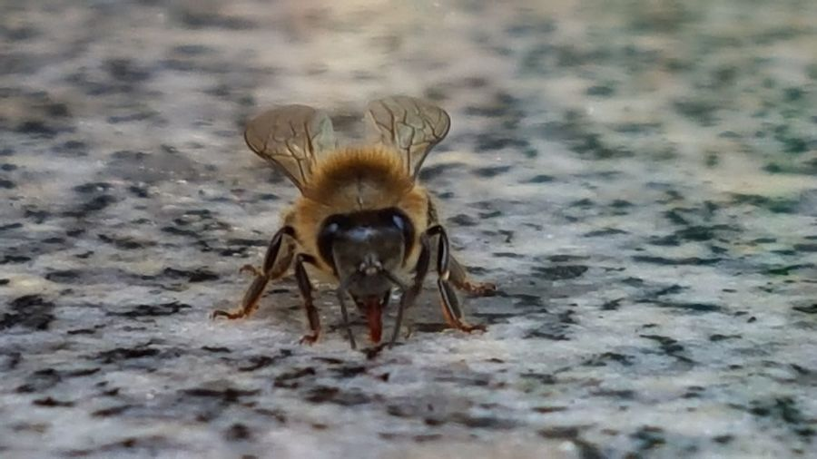 Sweets Hunter Nature Bee 🐝 Bees First Eyeem Photo