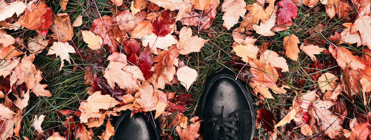 Low section of person on autumn leaves on field