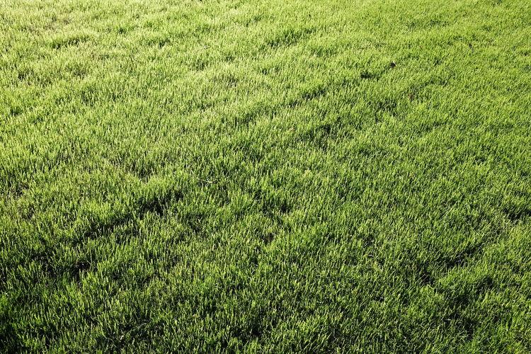 Full Frame Shot Of Grass On Sunny Day