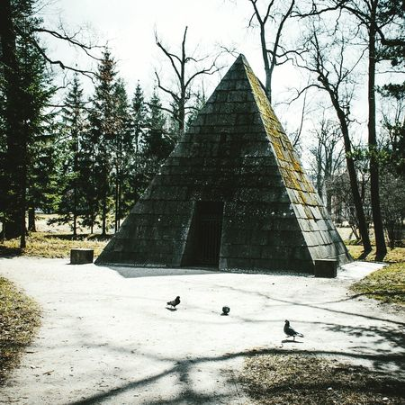Pyramid Pyramids Nature World Russia Sankt-peterburg Sankt-Petersburg Building Architecture