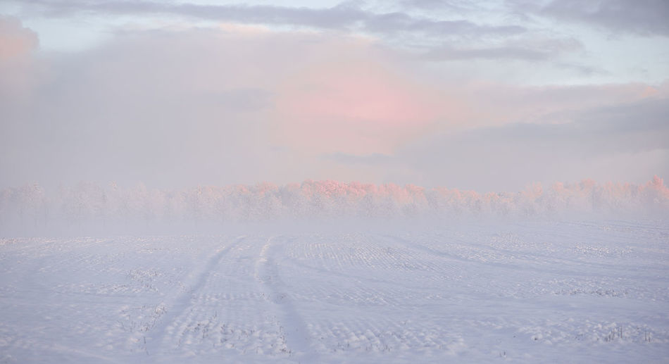 ...when a winter morning as mild as raspberry marshmallow