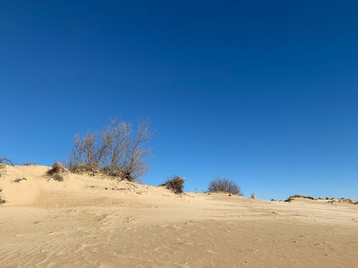 Sand dunes and blue sky Outer Banks, NC Outer Banks, NC Sand Dune Sky Blue Clear Sky Plant Tree Tranquility Land Scenics - Nature Nature Beauty In Nature Copy Space Sand Tranquil Scene Landscape Day No People Non-urban Scene Desert Environment Growth