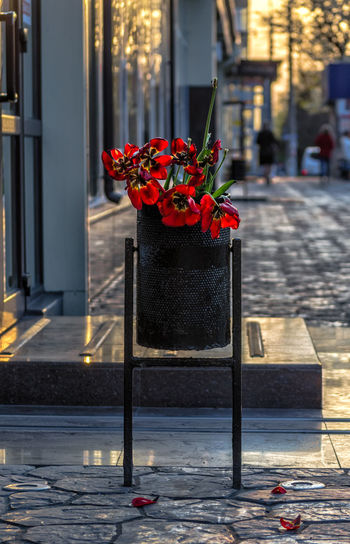 Red flower pot on footpath
