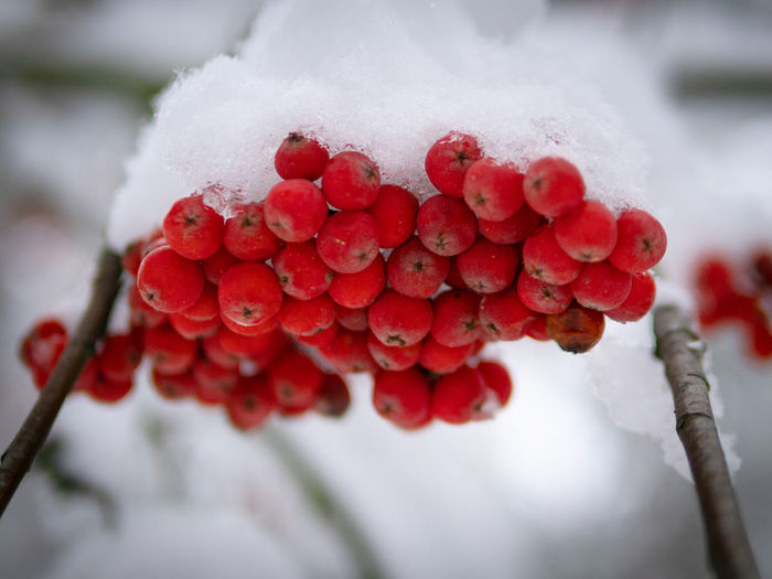 Close-up of frozen berries