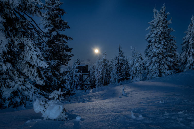 Full moon in winter Snow Winter Cold Temperature Tree Sky Moon Night Scenics - Nature Nature Plant Tranquil Scene Tranquility Beauty In Nature No People Full Moon Illuminated Landscape Environment Land Outdoors Moonlight Pine Tree Coniferous Tree Snowing