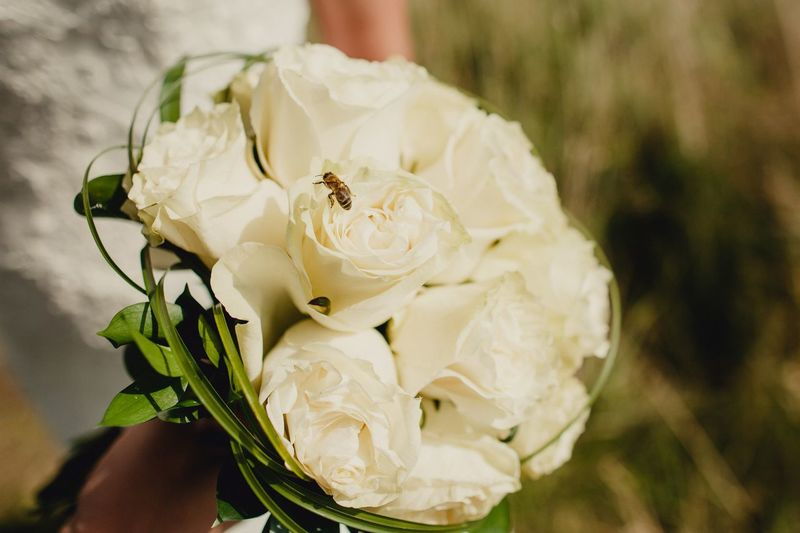 Wedding bouquet Flowering Plant Plant Flower Beauty In Nature Close-up Freshness Vulnerability  Fragility Growth Petal White Color Flower Head Nature Rose - Flower No People Animal Animal Wildlife Focus On Foreground Rosé Inflorescence Flowering Plant Plant Beauty In Nature Vulnerability  Freshness Growth Nature Botany Rosé Day