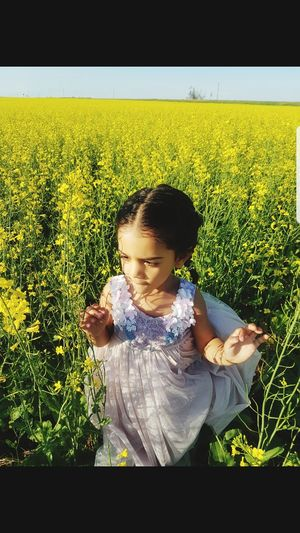 Child Childhood Girls Cereal Plant Yellow Agriculture Field Elementary Age Crop  Sky