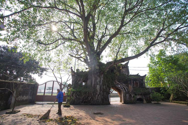 old tree EyeEm