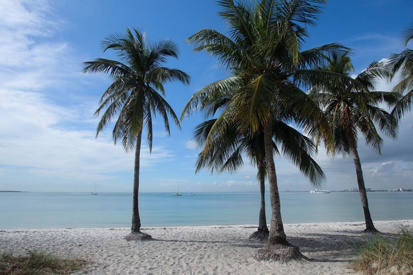 Palm Tree Beach Sea Sand Water Scenics Horizon Over Water Tranquil Scene Beauty In Nature Shore Nature Tree Sky Tranquility Idyllic No People Day Outdoors Cloud - Sky Palm Frond