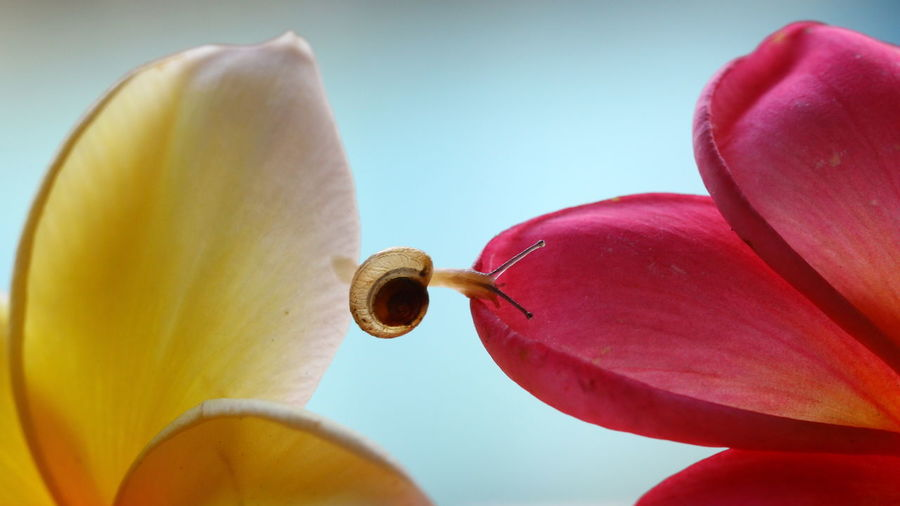 Close-up Flower Macro One Animal Snail