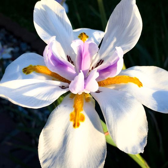 Maximum Closeness Flower Fragility Freshness Beauty In Nature Close-up Blooming Eye4photography