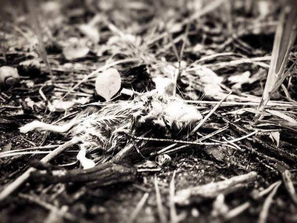 The End Animal Themes Selective Focus Animals In The Wild Skeleton Nature Death