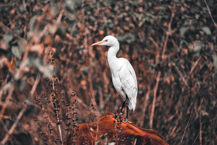 Close-up of egret in forest