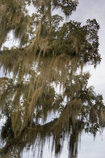 Treegasmic Tuesday Treetastic NEM Painterly Streamzoofamily