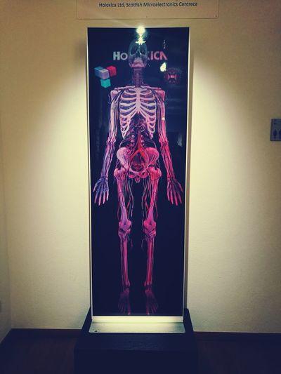 Anatomy museum in switzerland (basel)❤💜💙☺ Iskelet 3D Anatomy Museum