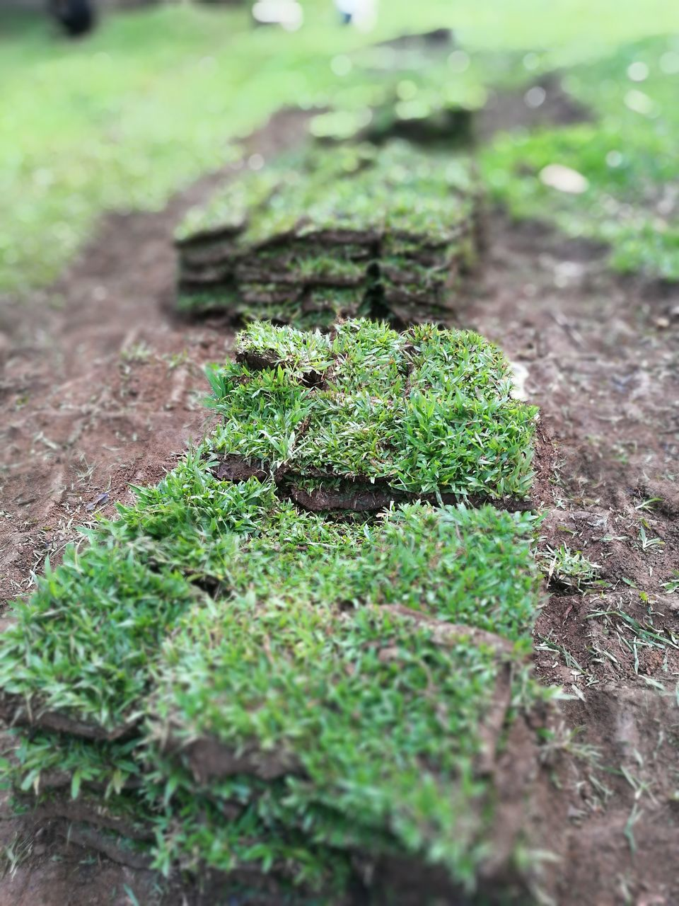 growth, green color, nature, plant, selective focus, no people, outdoors, day, field, moss, beauty in nature, close-up