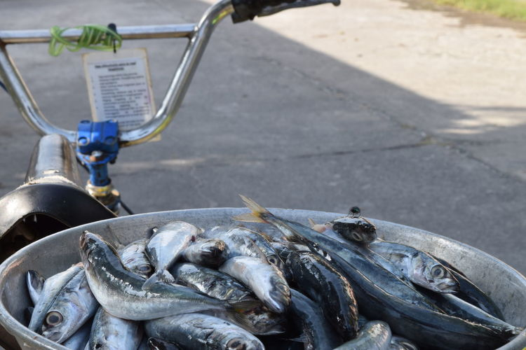 High angle view of fishes in container on bicycle for sale