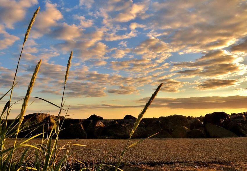 Good night. Enjoying Nature Denmark Tadaa Community EyeEm Sunlight