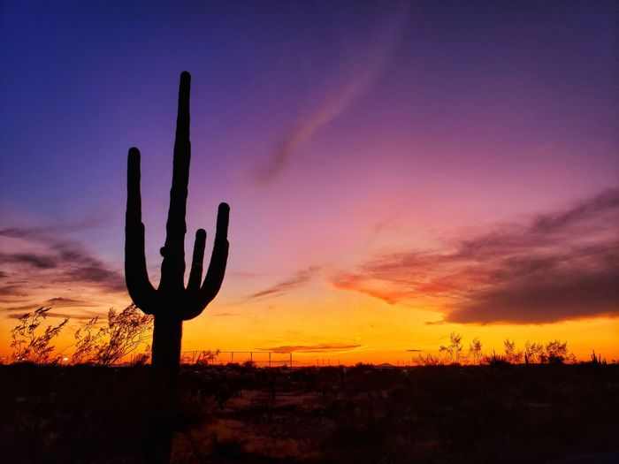 Silhouette saguaro cactus growing on field against sky during sunset
