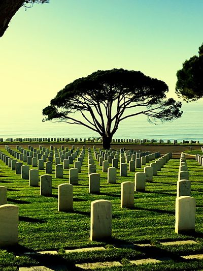 Ultimate Sacrifice Brave Medalofhonor SupportTheTroops Tombstone Cemetery Memorial Gravestone Graveyard Outdoors Tree Grave Day No People Nature Sky Grass Clear Sky