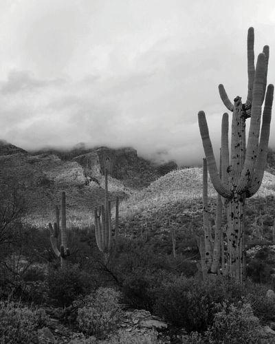 Catalina Mountains  Tucson New Years Eve FingerRockTrail