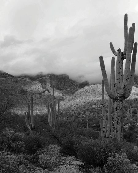 Catalina Mountains  Tucson New Years Eve FingerRockTrail