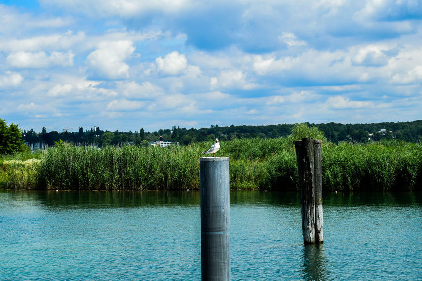 Bird Water Relax Swiss Nikon Nikonphotography Water Green Color No People Sky Cloud - Sky Outdoors Day Nature Plant Spraying Flower Beauty In Nature Tree Irrigation Equipment Freshness