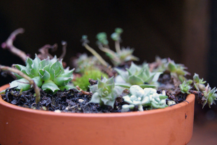Succulents I EyeEm Nature Lover EyeEm Selects Succulent Plants Succulents Beauty In Nature Beginnings Close-up Day Focus On Foreground Fragility Freshness Green Color Growth Leaf Nature New Life No People Outdoors Plant Potted Plant Selective Focus Succulent