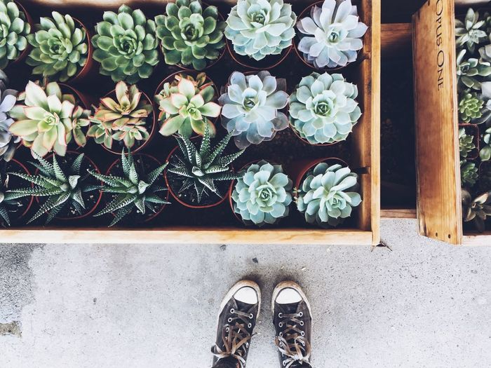 Organic Gardening Flower Converse Nature In The City Losangeles Succulents Cactus Potted Plant Plant High Angle View Shoe Day Growth Flower Nature