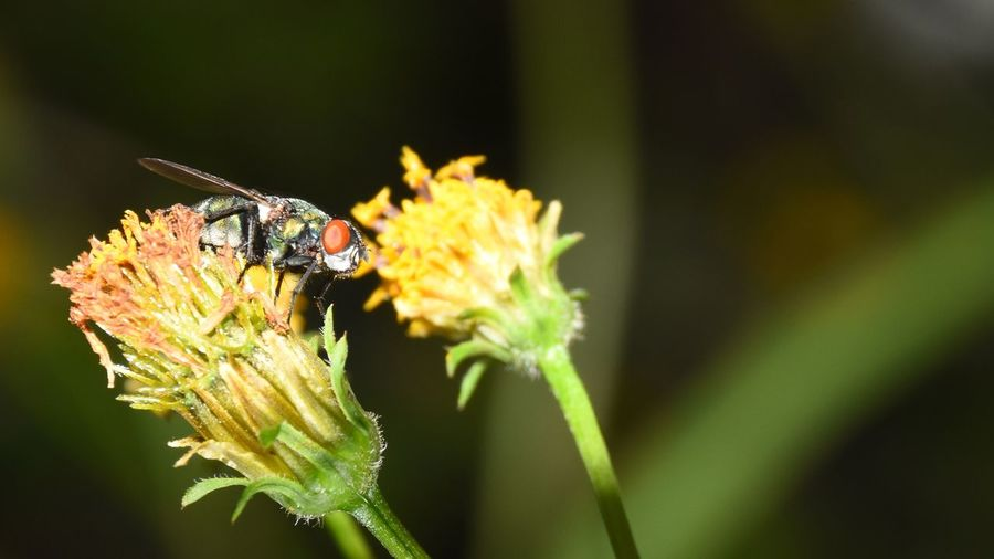Insect sitting