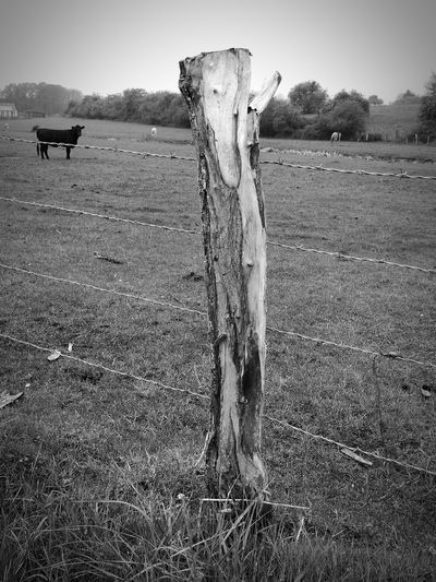 Campagne Agriculture Animal Themes Rural Scene Outdoors Day Rural Rural Landscape Landscape Landscape_photography Landscape_lovers Nature Nature_collection Grass Blackandwhite Blackandwhite Photography Black & White