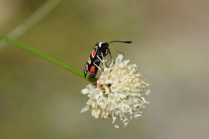 Animal Themes Nature Insect No People Côte D'Azur Fleurs Flower Jpho06 EyeEmNewHere Nikon Nikon D7100