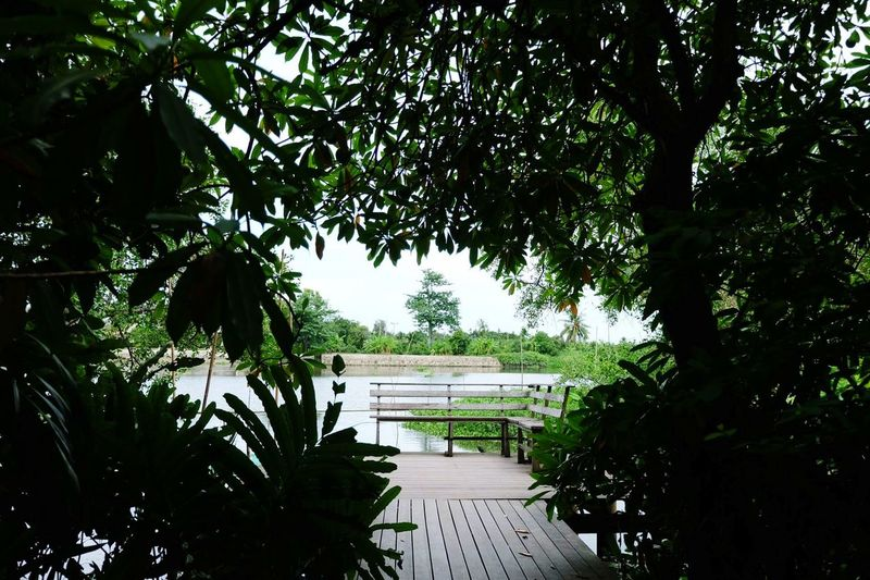 Tree Water Lake Outdoors Day Tranquility Nature No People Beauty In Nature Sky Riverside Thailand Thaivillage