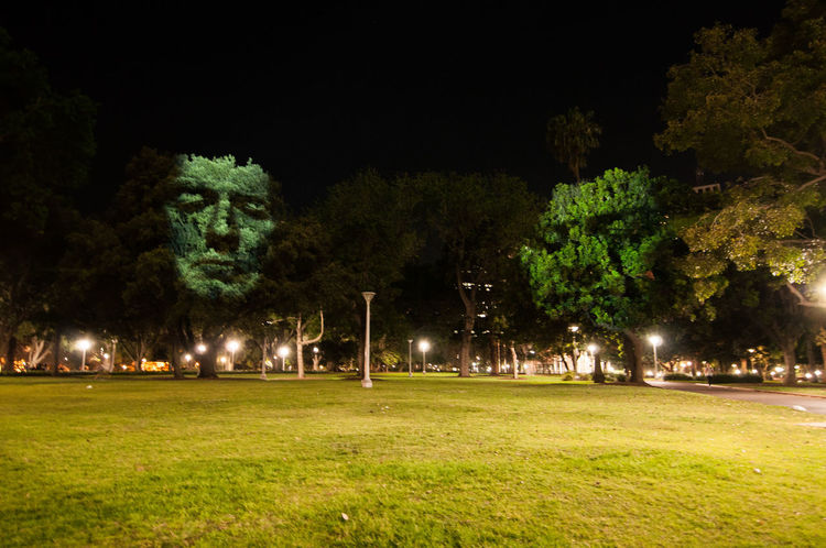 The artwork shows human faces by projector light on the trees in the project of Art & About Sydney. ArtWork Australia Beautiful Dark Event Show Tree Art Creative Design Face Festive Forest Garden Human Body Part Iconic Illuminated Night Outdoors Park Projector Lighting Scary Spotlight Sydney uniqueness