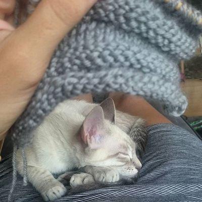 Kuscheln, stricken und TV. Heute gab's Wurmkur für alle Kätzchen, zum Glück hielt das beleidigt sein nicht lange an 😉 Knitting Blanco_the_cat Schlafendetiere_tsez