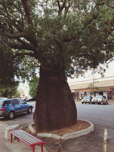 Trees Taking Photos Australia Roma