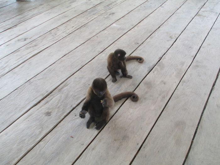 Babys Banana Life Monkeys Nature Brown Mischievous Young Animal