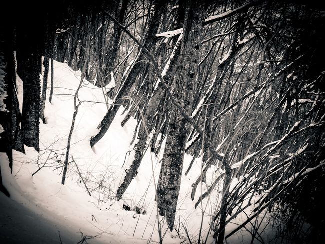 Wood Forest Snow Nature Tree No People Branch Low Angle View Outdoors Beauty In Nature Scenics San Benedetto In Alpe Emiliaromagna Italia EyeEmNewHere Blackandwhite Black And White Bnw Monochrome Dualtone Winter Cold Cold Temperature