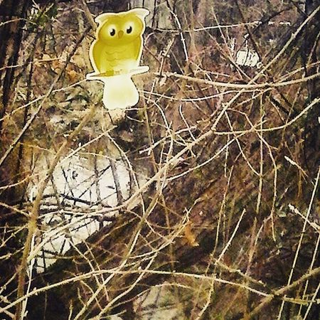 Owl You? Photograph Shot and Editedbyme Dorklyfeartistry Photographer Digitalartist Artist Painter Producer Emcee Vocalist Naturelover Modeling by Owl Decal Trees Grandriver Michigancenter Michigan Puremichigan Nature Pretty Beautiful ArtWork Best_ig_photographers