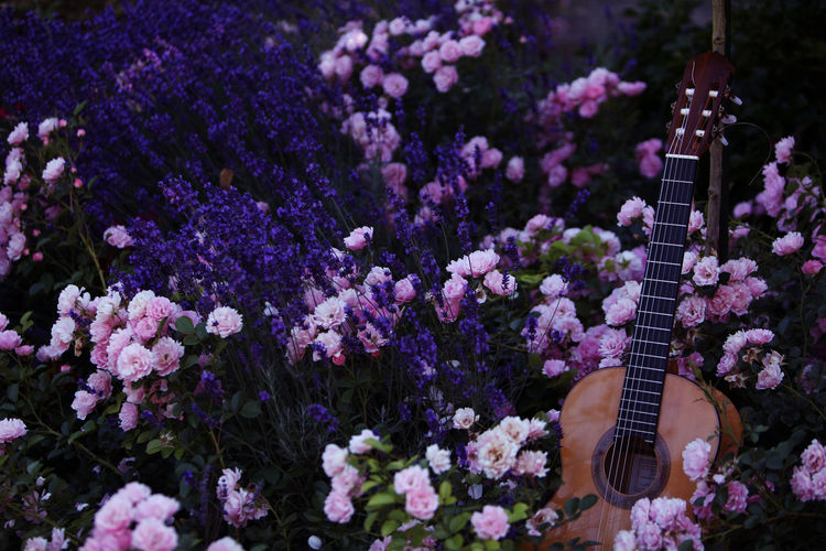 Acoustic guitar by flowers blooming on field
