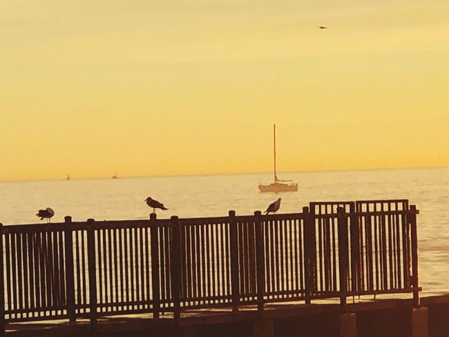 Sea Railing Sunset Water Horizon Over Water Nature Bird Beach Animal Themes Animals In The Wild Outdoors Scenics Beauty In Nature Perching Sky Seagull Clear Sky Tranquility Silhouette Animal Wildlife