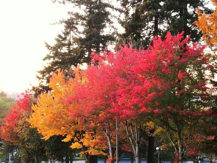 Fall Beauty Colorful Trees Fall Colors Fall_collection Changing Seasons EyeEm Nature Lover Just Trees Bright