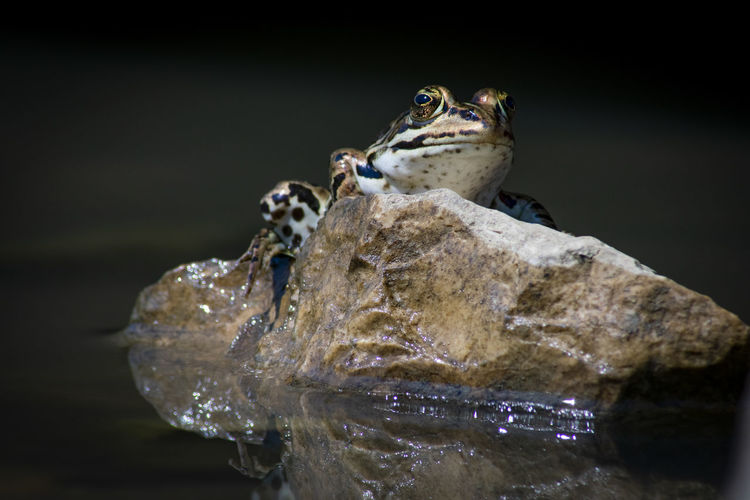 Close-up of a turtle on rock