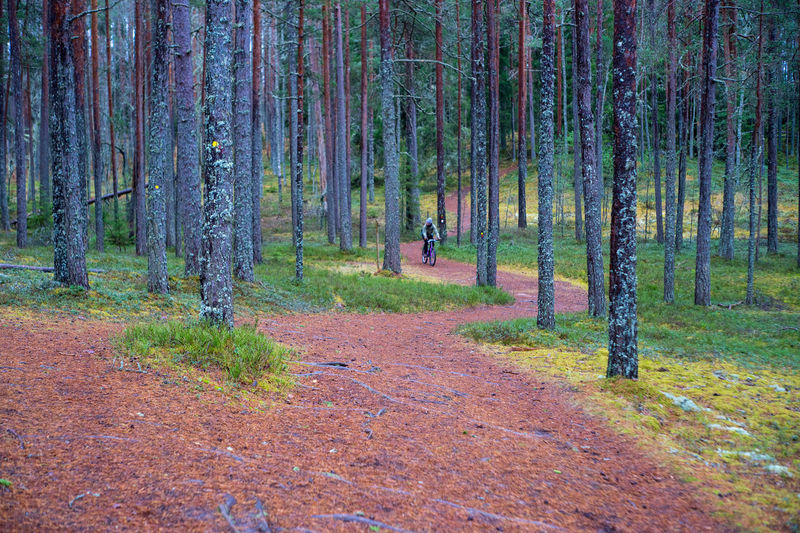 Beauty In Nature Cycling Cyclists In Landscape Day Forest Growth Nature One Person Outdoors People Scenics Tranquility Tree Tree Trunk