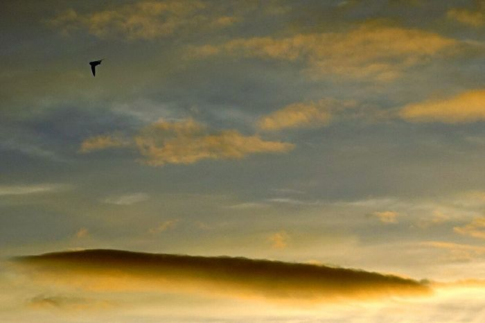 Bird Sunset Clouds And Sky Beautiful Sunset Getting Inspired Colourful Clouds Colourful Capturing Freedom cropped.
