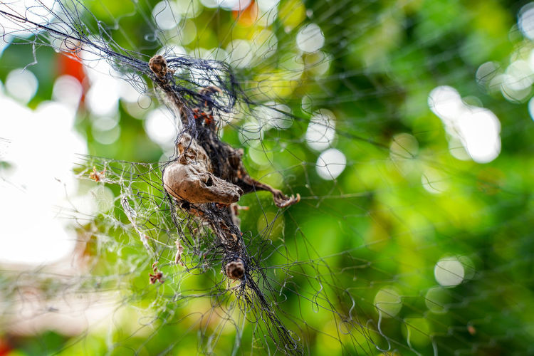 Invertebrate Spider Web Insect Animal Wildlife Close-up Animal Themes Animal Animals In The Wild Arachnid Focus On Foreground Spider Day Fragility Arthropod Plant Nature One Animal Selective Focus No People Vulnerability  Outdoors Web Complexity Animal Leg Trapped Net