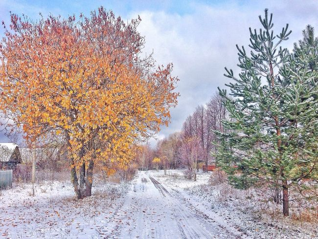 Nature Russia Buetiful Snow
