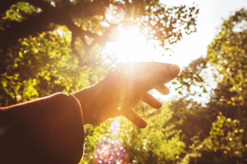 Light One Person Hand Human Body Part Sunlight Human Hand Nature Plant Lens Flare Personal Perspective Real People Body Part Human Finger Lifestyles Bright Outdoors Tree