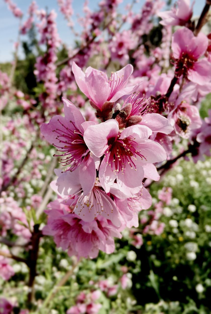 Close-Up Of Pink Flower Tree