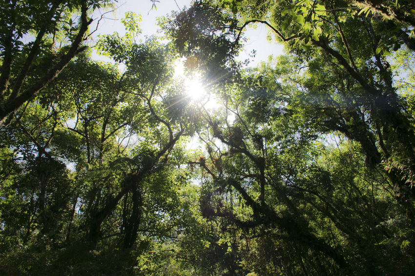 Forest Low Angle View Lush Foliage Nature Outdoors Sky Sun Sunbeam Sunny View